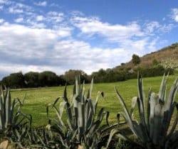 Torre Saracena: Garden